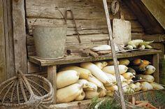 farm life & autumn