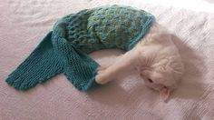 Mermaid Blanket Knitting Instructions – Pet Photo Prop - Instructions in English Create your own charming mermaid tail photography prop with this knitting pattern! Designed for a quick exit if the pet desires. Includes large, easy to read font and color photographs of the process. You may also contact me for assistance if you require any help with the pattern. This pattern uses two colors of yarn and a simple cable stitch to give the impression of scales. If you wish to use only one co...
