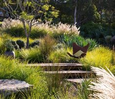 native-exotic plants mix modern garden landscape design