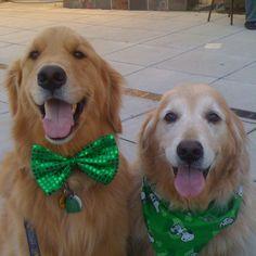 Happy St. Patty dogs