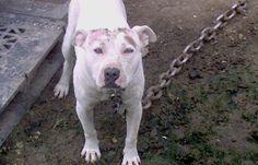 Sign: Shut Down Cruel Virginia Dogfighting Ring For Good