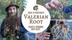 Valerian - Back to Your Roots with Yarrow Willard Cl.H | Harmonic Arts - YouTube