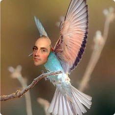 hummingBURRd