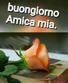 Italian Memes, Italian Quotes, Corazones Gif, Italian Life, New Years Eve Party, Good Mood, Good Morning, Emoticon, Gnocchi