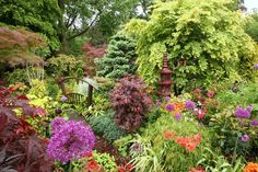Lower garden in late spring after rain (May 25)   Flickr - Photo Sharing!