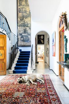 Cozy Home Decoration blue and red interior with adorable pup!Cozy Home Decoration blue and red interior with adorable pup! Home Design, Home Interior Design, Interior Architecture, Interior Decorating, Design Design, Rental Decorating, Design Room, Luxury Interior, Chair Design