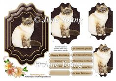 Seal Point Siamese Cat : The Designer Twins ...where creativity encounters quality and value