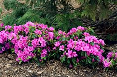 From hydrangeas to fragrant Daphne, browse our collection of shade-tolerant shrubs and get growing tips from HGTV.