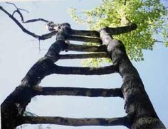 Wooden Ladders Don't Grow On Trees!  http://www.ladders-online.com/Loft-Ladders/Aluminium-Loft-Ladders  http://blog.ladders-online.com/2012/05/14/wooden-ladders-dont-grow-on-trees/