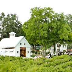 The couple and their guests enjoyed an evening of celebrations in a rustic outdoor setting at the HammerSky Vineyard.