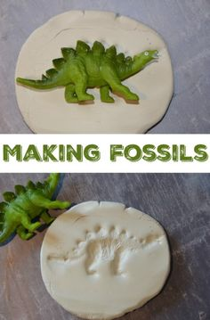 Charles Darwin – Making Fossils and Natural Selection – Science Sparks Science Week, Preschool Science, Science Activities, Preschool Activities, Science Jokes, Camping Activities, Elementary Science, Preschool Kindergarten, Science Classroom