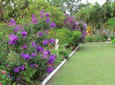 amazing side garden view