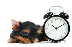 Don't forget to Spring your clocks ahead one hour tonight before you go to bed (if this applies to where you live)- Daylight Savings Time begins at 2am Sunday. Photo from Shutterstock.