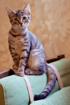 Kitten by Anastasia Abramova