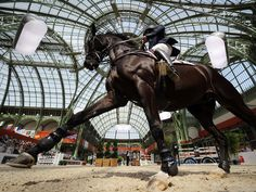 Alexandre Zettermann rides Isaac as he competes in the international jumping competition Saut Hermes at the Grand Palais in Paris (2011)