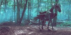 I got Thestral! Which Fantastic Magical Beast Are You Based On Your Zodiac Sign?