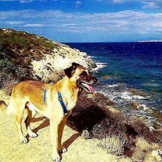 Problem Solving: come farà il nostro Clyde per raggiungere la sua amata amica umana Dania? Scoprilo su BauSocial.it cliccando sul link che trovi nella nostra bio!  #BauSocial Foto di: @clydetherapy  Clyde top model! #clydetherapy #clyde #pettherapy #pettherapydog #dogoftheday #dog #doglifestyle #doggy #malinoislove #malinoislovers #vitadacani #wilddog #fitdog #cane #crazydog  #belgianmalinois #pastorebelga #pastorebelgamalinois #thegreatoutdogs #doglove #giramondo #esploratore #globetrotter…