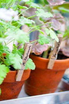 Askartele yrteille nimikyltit | Viherpiha Vegetable Garden, Herbs, Vegetables, Plants, Vegetables Garden, Herb, Vegetable Recipes, Vegetable Gardening, Plant