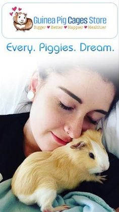 Guinea Pig Sale, Buy, Adoption & Rescue | Near me Are you searching for Guinea Pig or baby guinea pig for sale, purchase, Adoption & rescue ?. We are here to provide you better breeds of all types of Guinea pig.