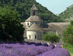 Starting your own lavender plants – Orange County Register