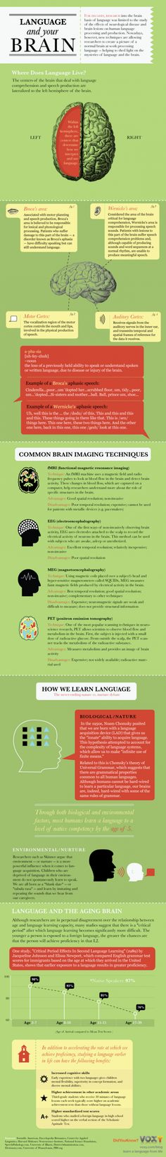 Language and Your Brain Infographic. Super interesting!