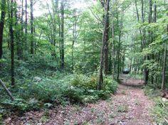 Photo of 6-7000 Blk Snake Hollow Rd, Sneedville, TN 37869 (MLS # 562809)
