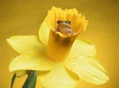 Frog inside flower