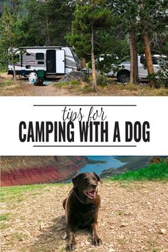Tips for Camping with Your Dog - Thinking of taking a camping trip with your pooch? Check out these tips and tricks for camping with your dog so you both can get out and enjoy exploring the great outdoors. Tips for Camping with Your Dog Diy Camping, Camping Survival, Camping Ideas, Camping Hacks With Kids, Camping Supplies, Beach Camping, Camping Activities, Camping Essentials, Camping And Hiking