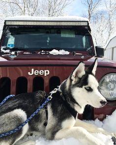 Husky + Jeep