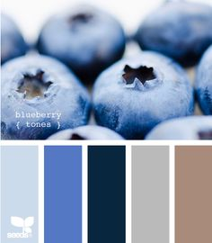 blueberry colors - the floor in the den is white terazzo with brown flecks (can't do anything about that) and I was thinking of a durable navy blue for the furniture.  The lighter blue or the gray might work for the wall color.