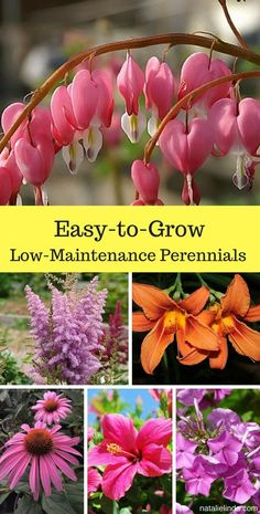 Urban Garden Design Low maintenance perennials are perfect for adorning your garden. They require little upkeep, and grow for years. Here's a list of 18 gorgeous perennials! Herb Garden, Lawn And Garden, Easy Garden, Simple Garden Ideas, Terrace Garden, Garden Bed, Growing Flowers, Planting Flowers, Flower Gardening