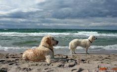 hintergrundbilder von hunden