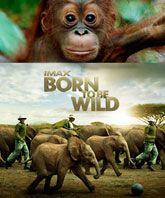 Cosmonova - Born to be wild