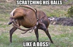 Funny animal pictures, attack of the funny animal pictures, funny pictures, picture dumps, animal pictures Funny Animal Pictures, Funny Images, Funny Photos, Funny Animals, Easy Animals, Deer Hunting Humor, Funny Hunting, Hunting Quotes, Hunting Girls