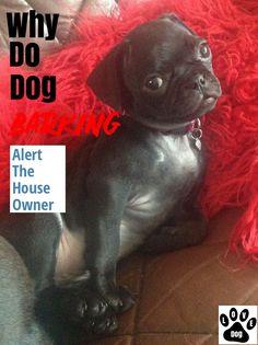 Dog Barking: Tips And Tricks #dogbarking Stop Dog Barking, Love Pet, French Bulldog, Pets, Animals, Animales, Animaux, French Bulldog Shedding, Bulldog Frances