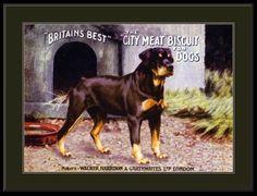 English-Print-Rottweiler-Dog-Dogs-Puppy-Puppies-Advertisement-Art-Vintage-Poster