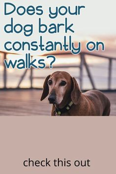 Dog Barking, Training Your Dog, Dogs, Animals, Animales, Animaux, Pet Dogs, Doggies, Animal