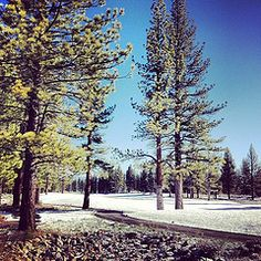 A lovely dusting of snow this morning at Schaffers Mill. #snow #golf #tahoe #truckee #nature