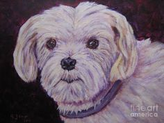 Maltese Dog Painting Painting  -  Maltese Dog Painting Fine Art Print