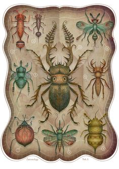 Entomology Tab. I - A4 art print // via vladimirsart's etsy shop