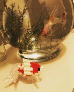 """12 mentions J'aime, 3 commentaires - みや (@miyako5539) sur Instagram: """"nano  block ϵ( 'Θ' )϶ ☆ 初めてのナノブロック わが家の金魚に仲間入り☆ 泳いでるみたい⚪︎⚪︎○ #nanoblock #金魚 #かわいい#尾ビレ動かせちゃう…"""""""