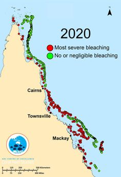 Great Barrier Reef's third mass bleaching in five years the most widespread yet Australia Weather, Australia Travel, Scuba Diving Gear, Cave Diving, Cancun Vacation, Coral Bleaching, Weather Change, Hope For The Future, Great Fear