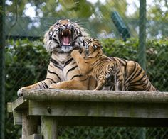 Mother and cub at Dublin Zoo
