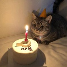These cute kittens will warm your heart. Cats are fascinating companions. Cute Baby Cats, Cute Baby Animals, Animals And Pets, Cute Dogs, Gatos Cool, Cat Aesthetic, Cat Birthday, Happy Birthday, Cute Creatures