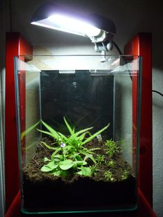 Nouvelles plantes carnivores dans mon nano terrarium http://www.pariscotejardin.fr/2014/04/nouvelles-plantes-carnivores-dans-mon-nano-terrarium/