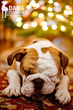 Christmas dog Old English Bulldog Merry Christmas Card Puppy Holiday Dogs Santa Claus Dog Puppies Xmas Bull Dogs