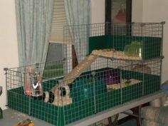 Guinea pig home