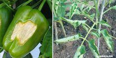 5 Τρόποι για να Προστατεύσετε τα Φυτά Σας από το Στρες του Καύσωνα  #Φυτά