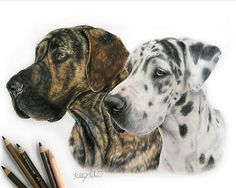 Dog #dog drawing .  Beautiful Drawings, Cool Drawings, Studio, Portrait, Dogs, Instagram Posts, Animals, Create, Pretty Drawings
