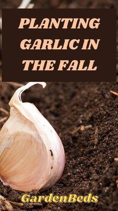 Vegetable Garden Tips, Container Gardening Vegetables, Veg Garden, Planting Vegetables, Garden Care, Edible Garden, Lawn And Garden, Growing Vegetables, Planting Garlic
